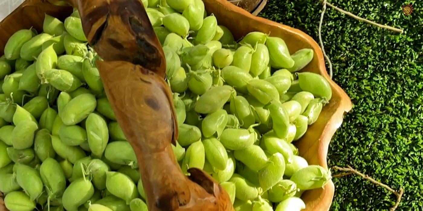 fresh green chickpeas